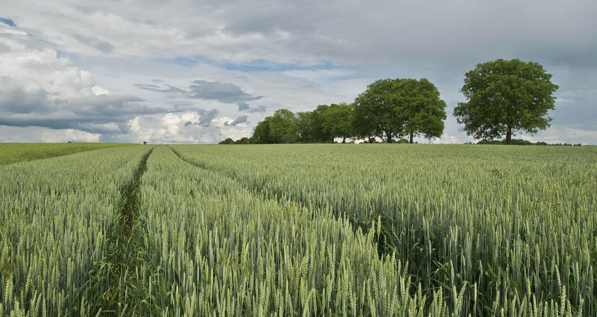 Формиран одбор за пољопривреду Народне странке