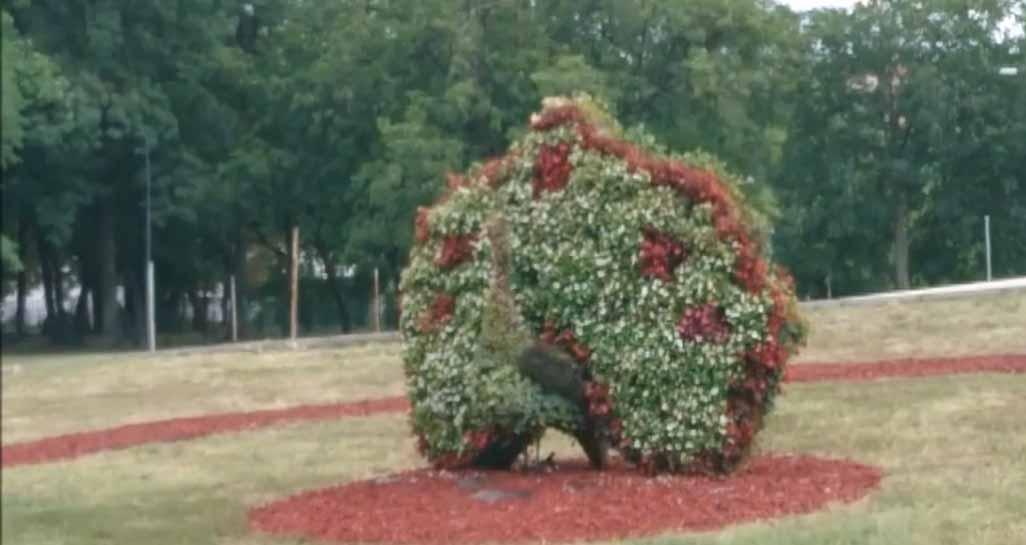 Ниш: Дебакл напредњачке власти – колектор није спречио поплаве, бацају милионе на фонтане и пауна од цвећа