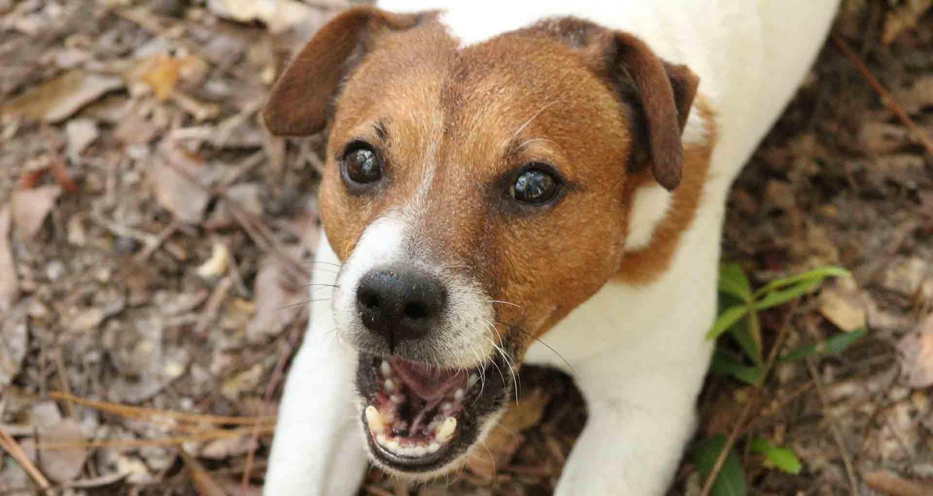 Народна странка Трговиште: Агресивни пси луталилце нападају децу и одрасле, општина ништа не предузима