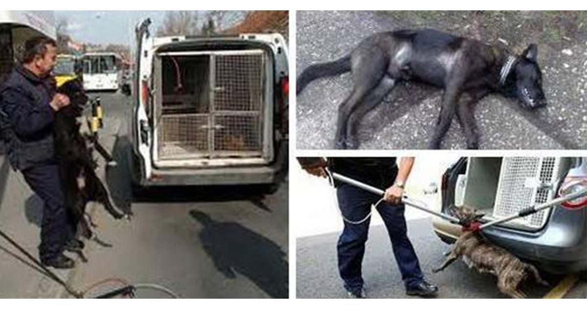 Народна странка Врњачка Бања: Хитно зауставити монструозно опхођење фирме Авенија МБ према напуштеним животињама